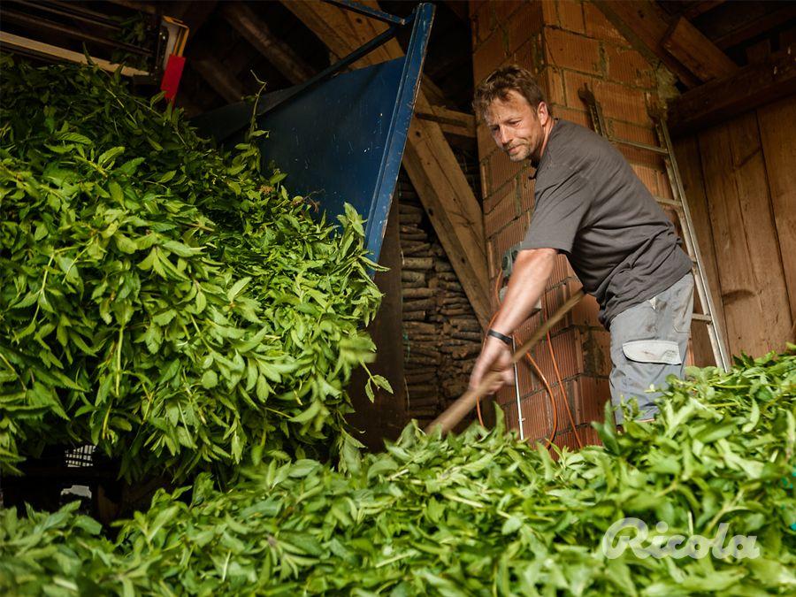 Ricola Herb Farmer #Herbs #Cultivation #Ricola