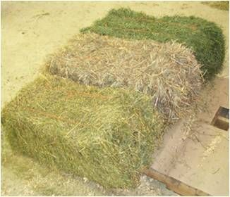 What You Need To Know About Horse Hay