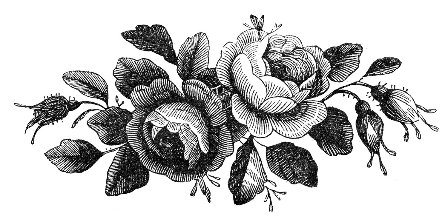 Antique Stock Images - Rose Engravings - Godey\'s | Lavendeldruck