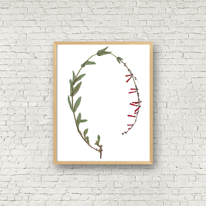 Encantador Impresiones Enmarcadas Botánicos Friso - Ideas de Arte ...