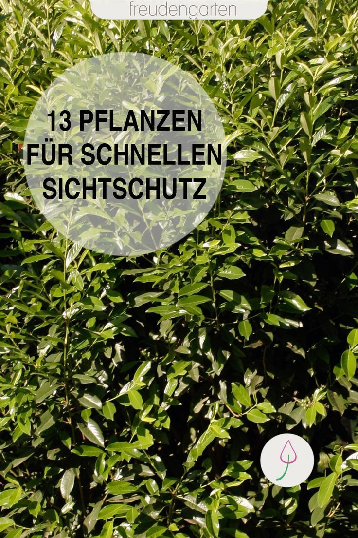 Schnell wachsende Pflanzen als Sichtschutz   Wachsenden pflanzen ...