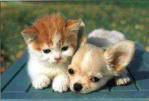 The Two Of Them Are Sweet Together Kittens And Puppies Cute