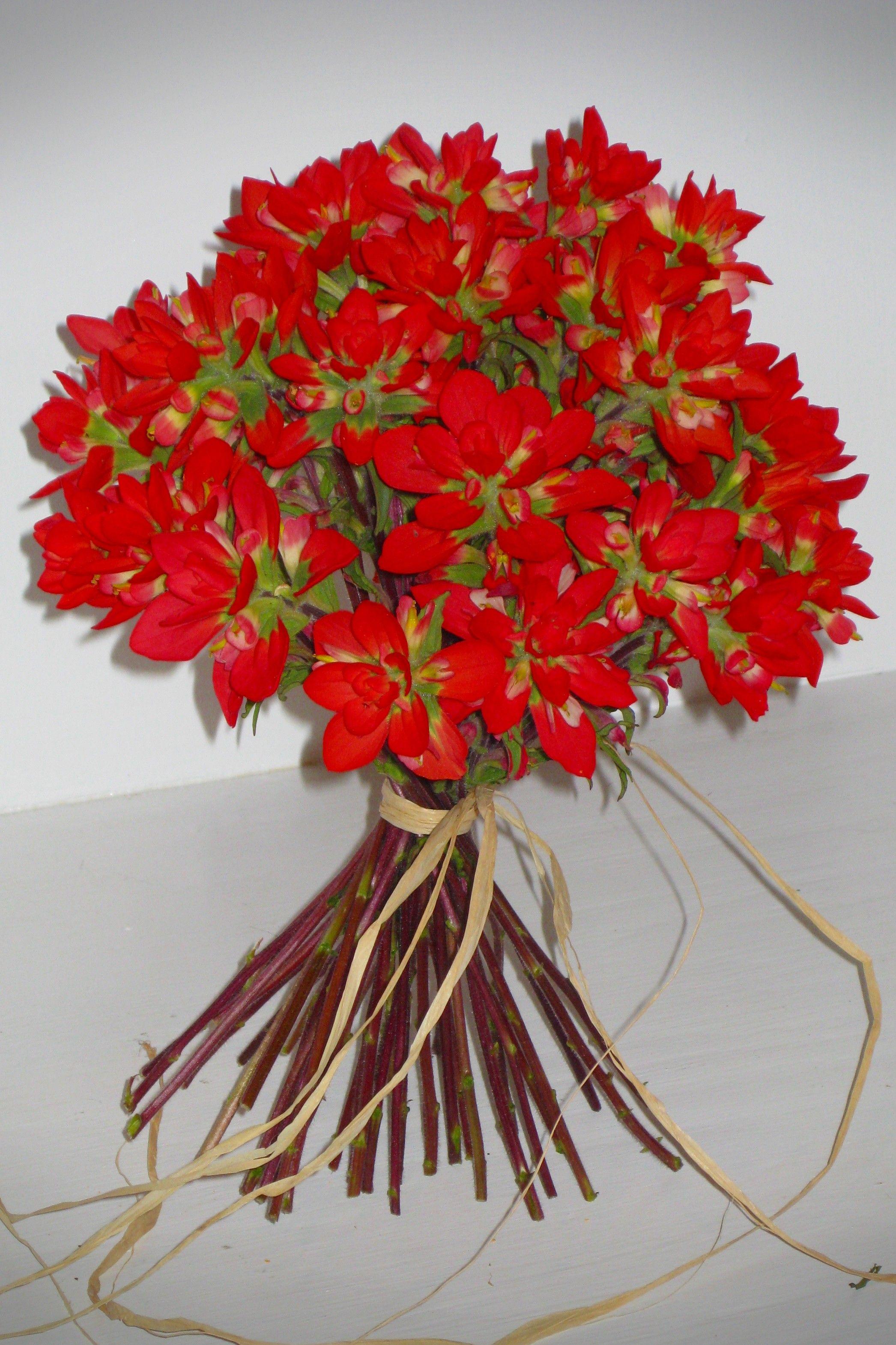 My Favorite Flower Indian Paintbrush Bridal Bouquet