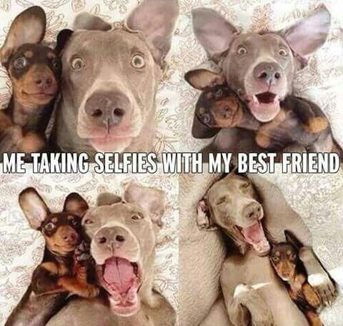 Pet selfies ....