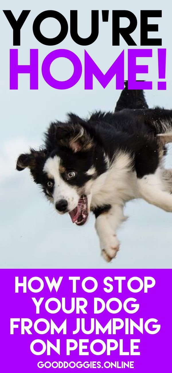 Simple Ways On How To Train Your Dog Not To Jump On People Dog