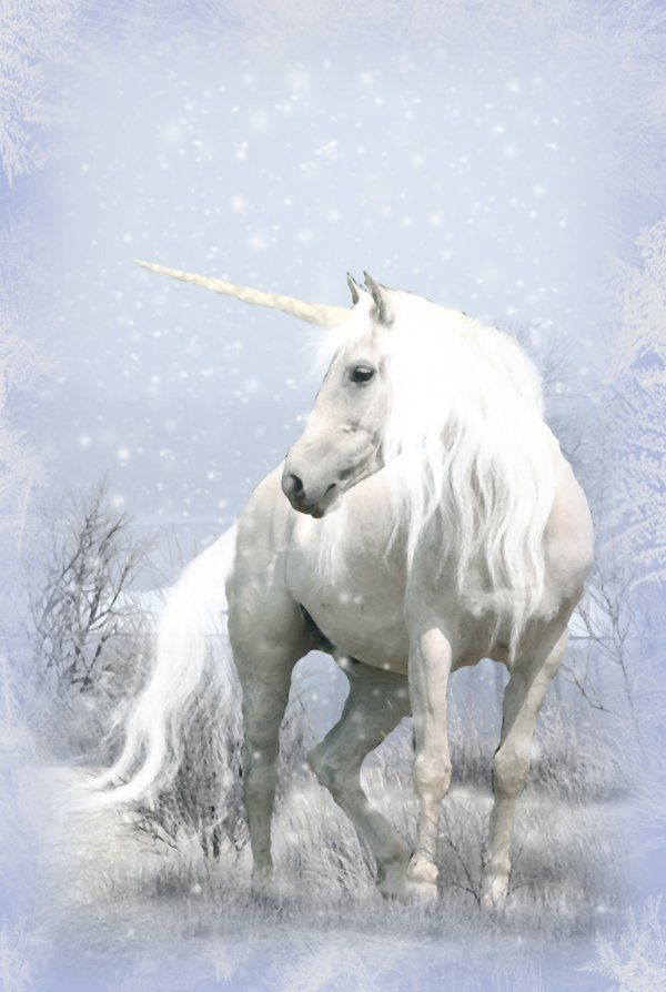 Unicorns And Fairies Real Unicorn in Wint...