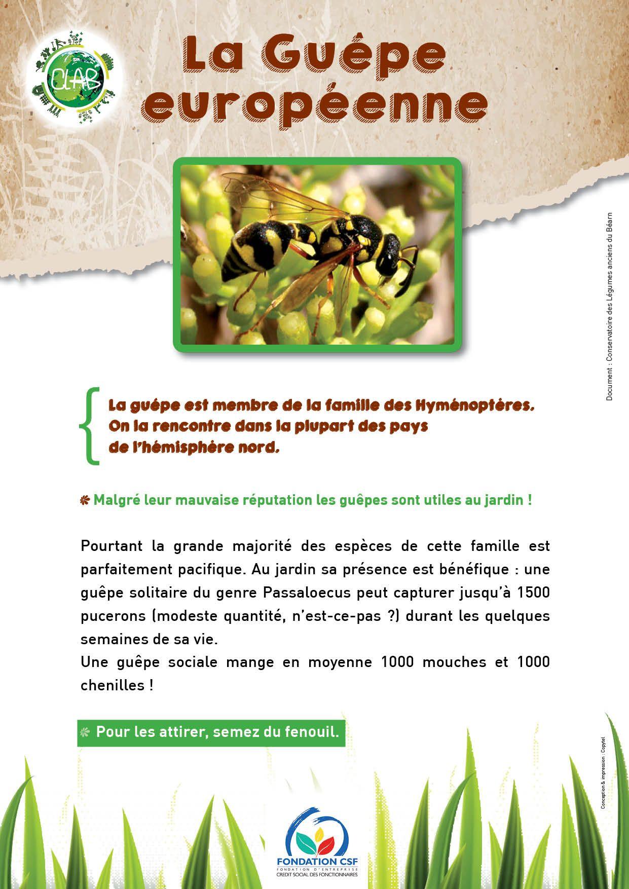 5b7dc371d61b02dade98b3341fab8deb Luxe De Abri De Jardin En Dur Des Idées