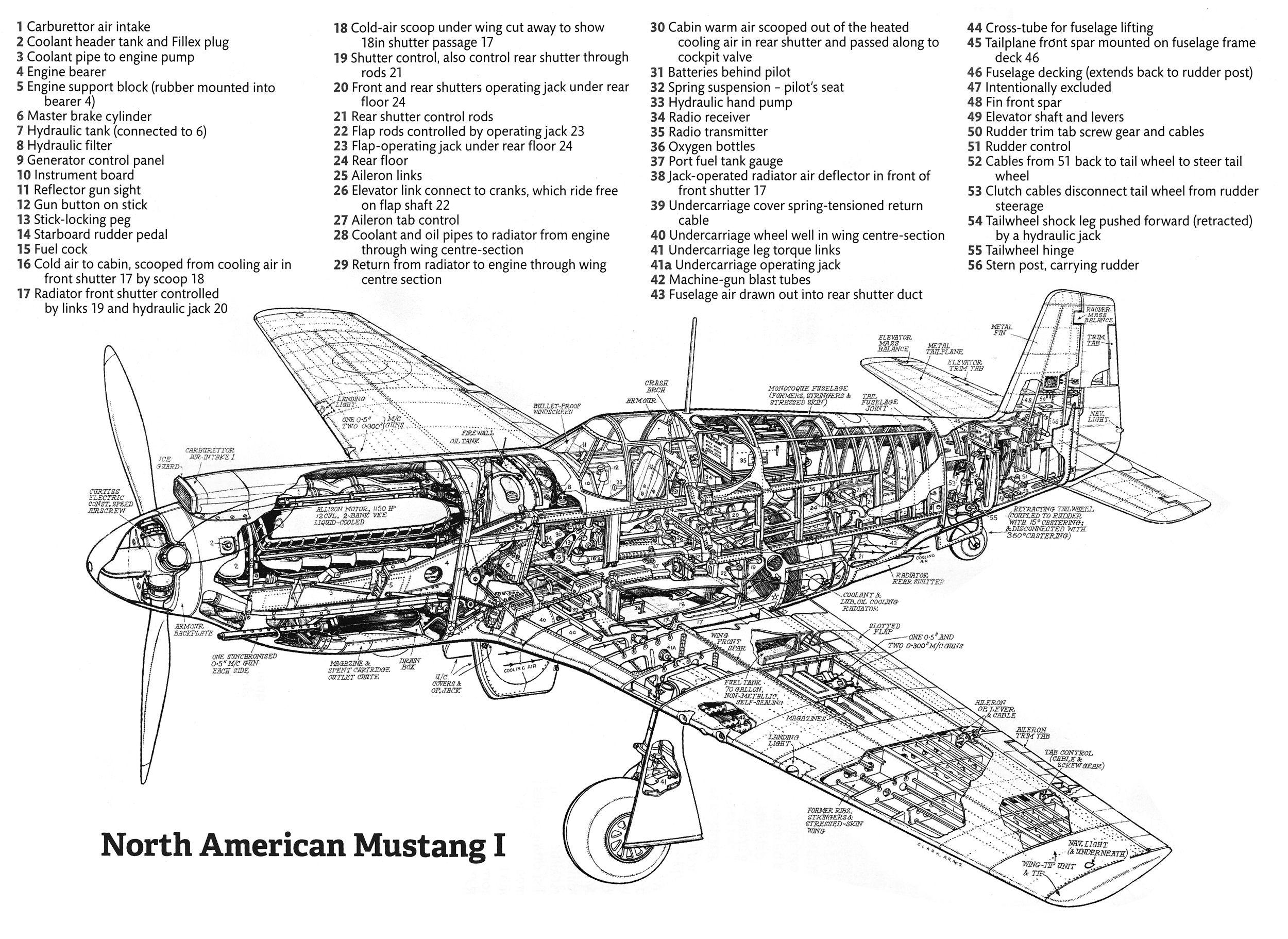 North American Mustang