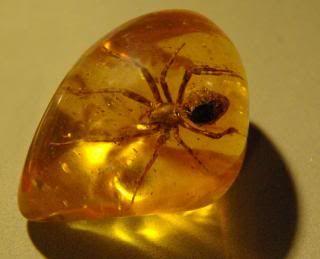 """Por vezes o pingo da RESINA que escorre cai sobre um insecto aprisionando-o no seu interior e de onde não poderá jamais sair. Neste caso é um pedaço de resina """"AMBAR"""" com uma aranha no interior. O AMBAR é utilizado em joalharia e outros objectos."""