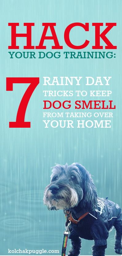 Hack Your Dog Training 7 Rainy Day Tricks To Help Prevent Wet Dog