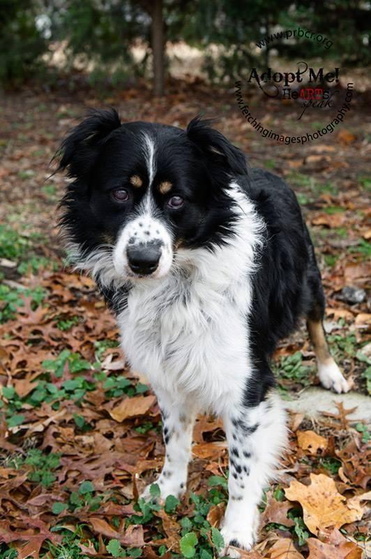 Adopt Jasper on | ❤ Beautiful Black aaawe-DOPTABLES