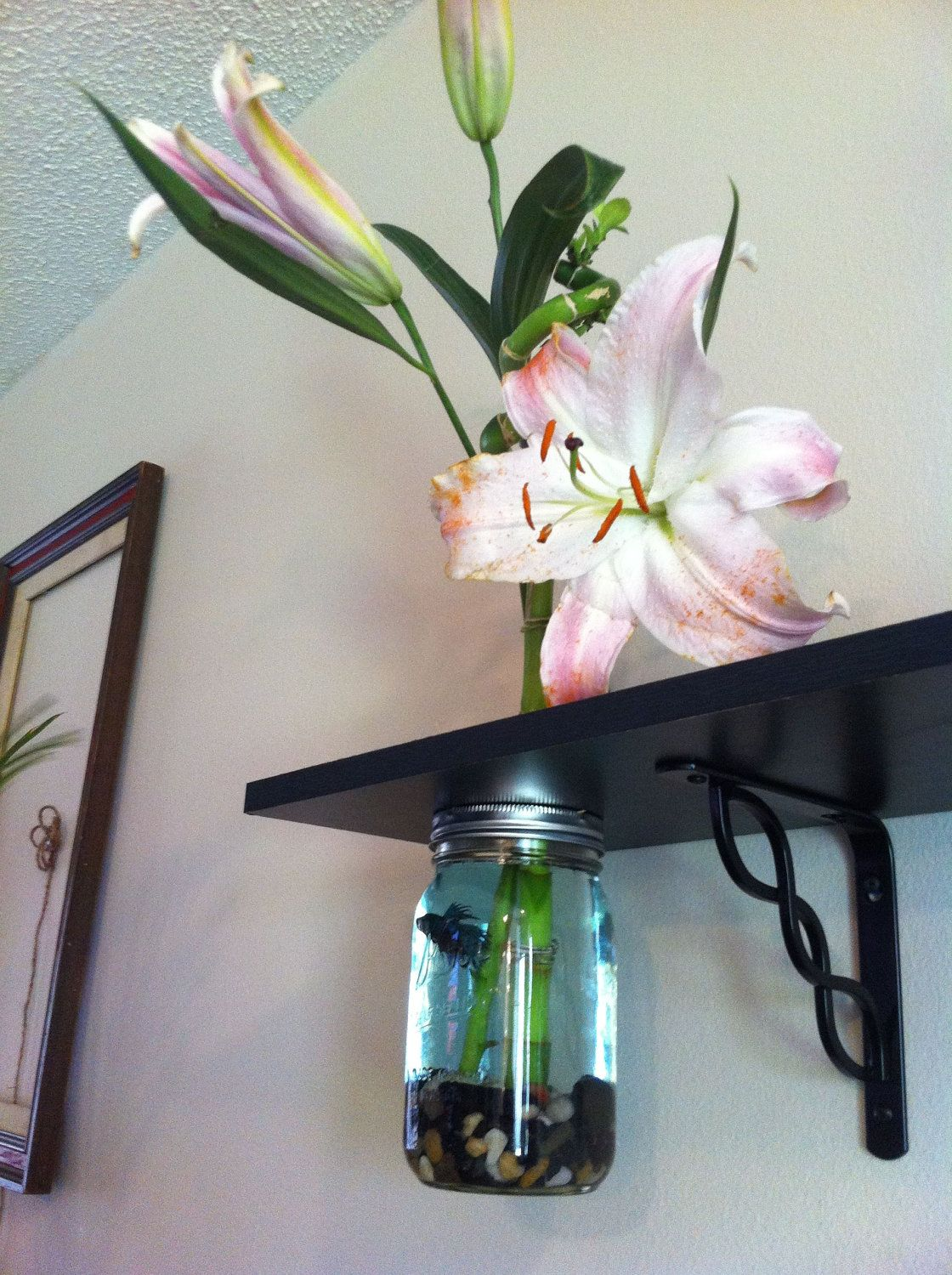 Mason jar fish tank u vase shelf fish tank ideas by felicia a