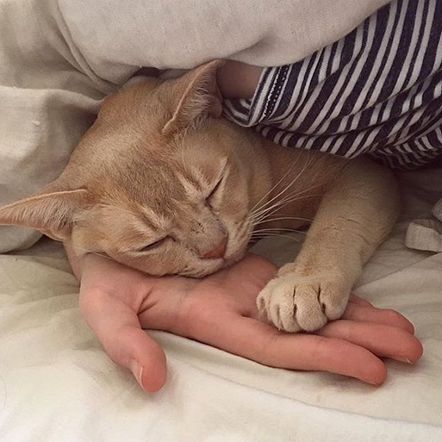 When my cat was young I would softly touch the top of her paw, and kiss it.  To show her love she will gently put her paw up on my nose. She will put her paw on top of my hand if she does not want to be touched. Touch is very important.