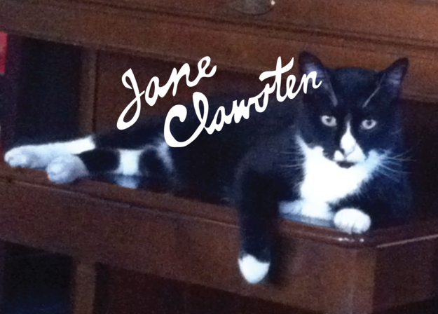 25 Literary Pun Names For Your Cat Cat names, Boy cat