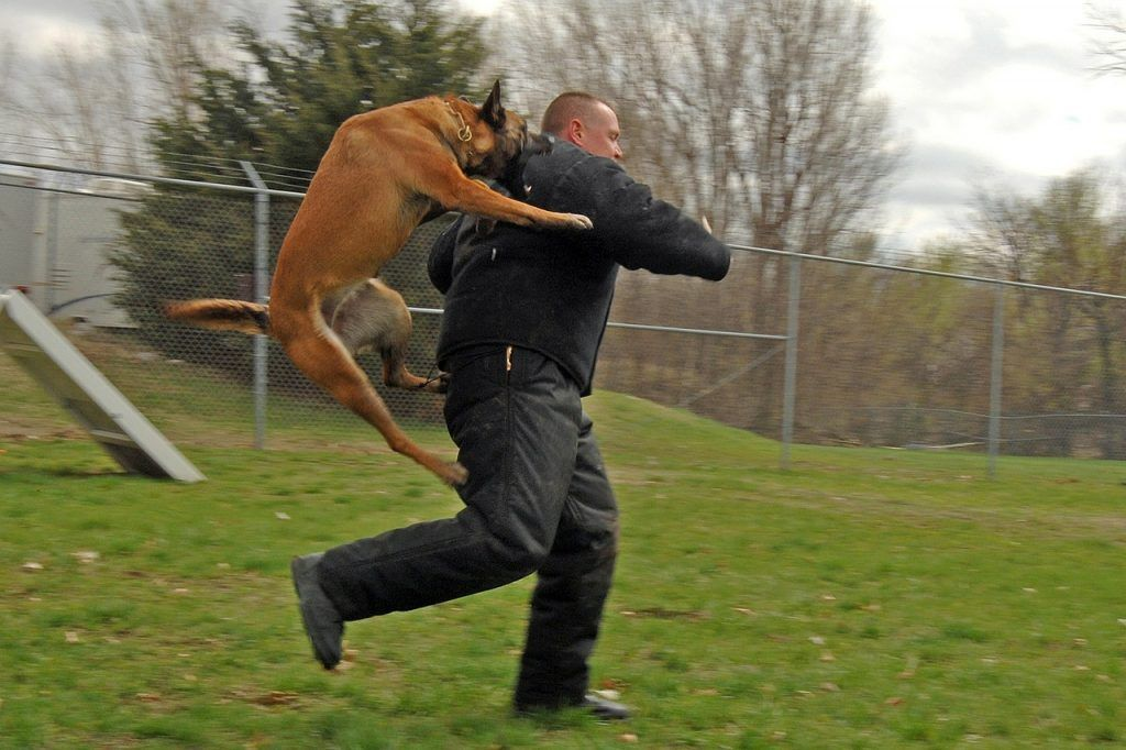 How To Teach Your Dog To Attack On Command Tricks To Train