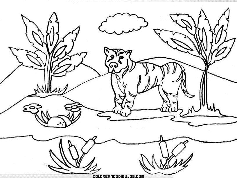 Paisaje de la selva para colorear | crisanto | Pinterest | Selvas ...
