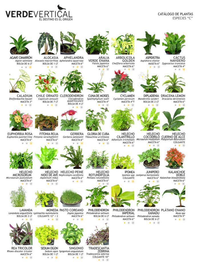 Especies c de verde vertical verdes jardines for Jardines verticales pdf