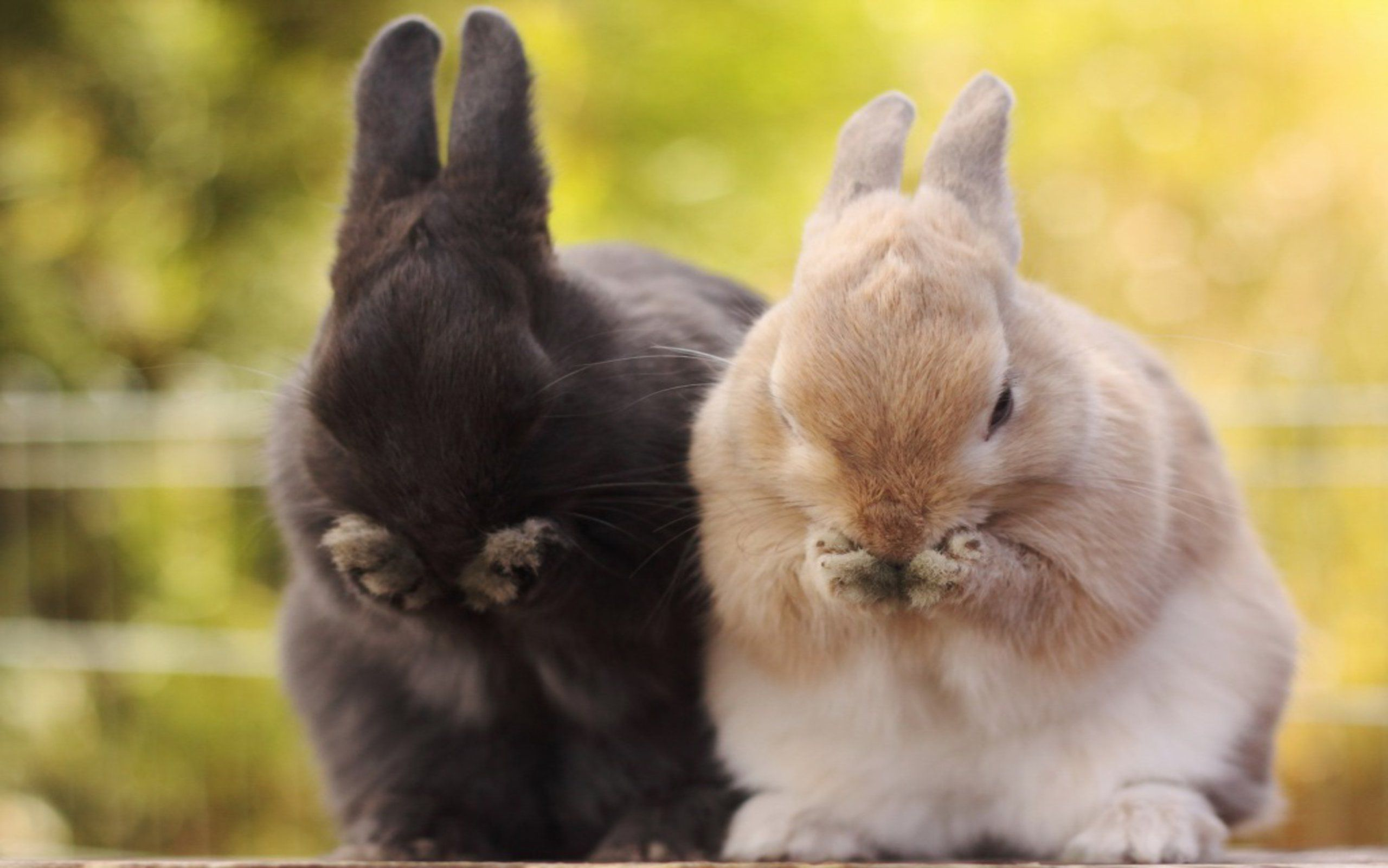 Pin by Keith on Cute Cute bunny pictures