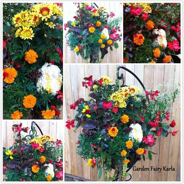 Vibrant colorful fall hanging basket on hanging plant for Colorful hanging planters