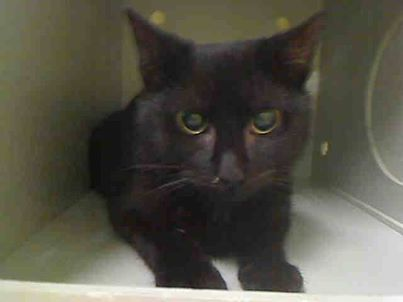 Safe To Be Destroyed 3 3 14 Baby Alert Scared But Sweet Panther Kitten Needs You Brooklyn Center My Name Is Jax My Anima My Animal Animals Sweet Dogs