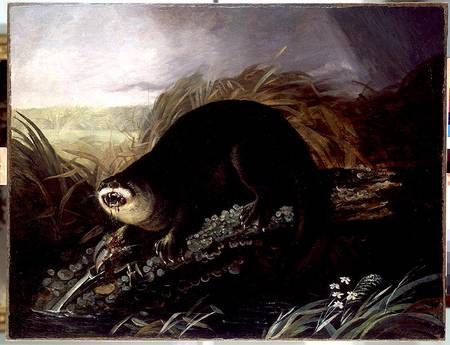Otter Caught in a Trap - John James Audubon as art print or hand painted oil.