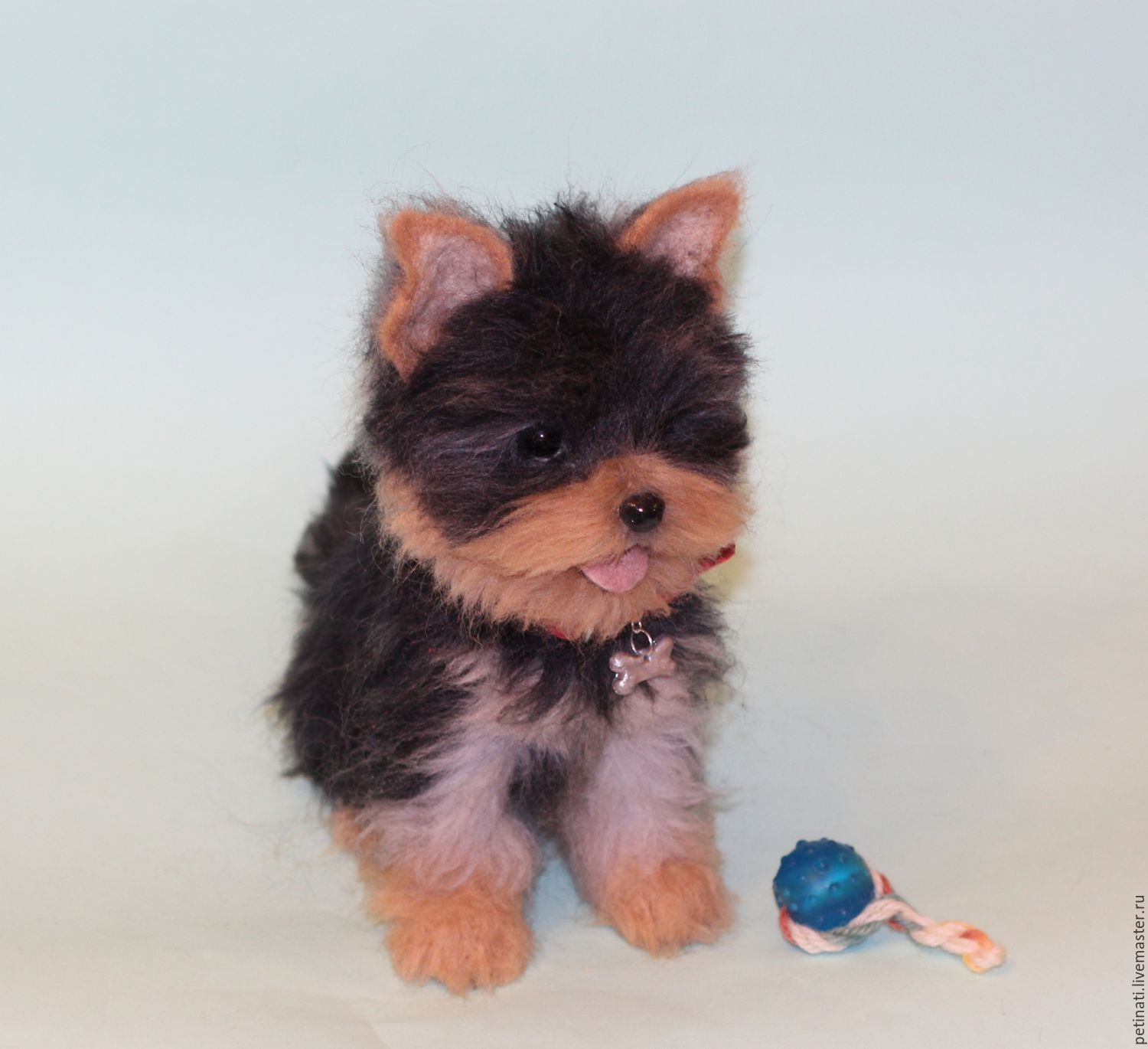 Baby Yorkshire Terrier Mouse Yorkshire Terrier Puppies