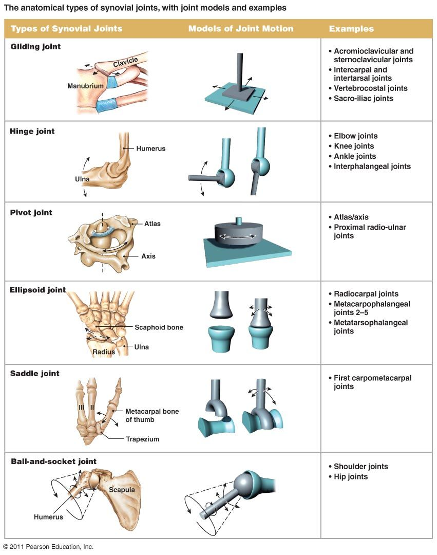Here are some types of joints and how they differ in the body ...