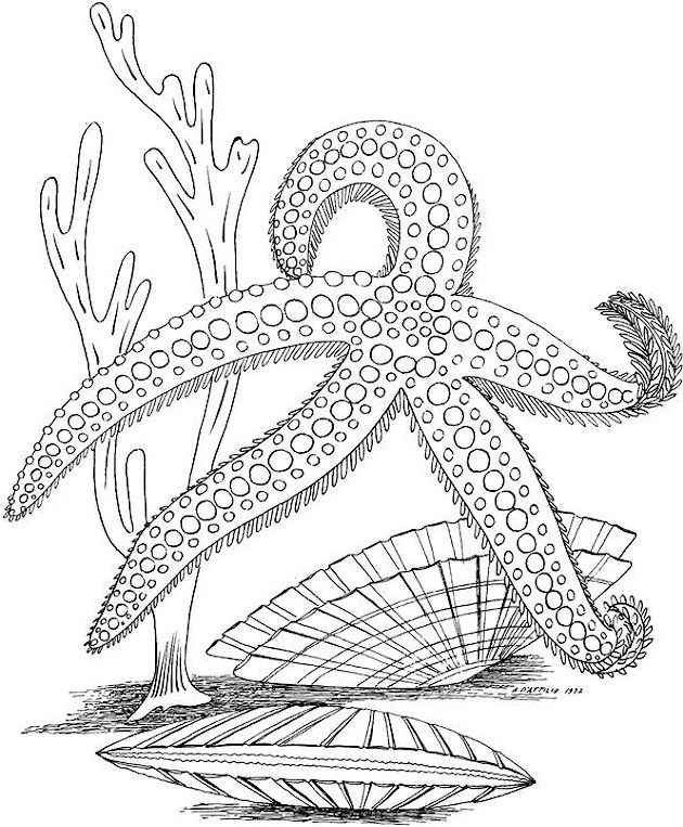 Coloring Pages For Under : Seascape ocean colouring page adult under
