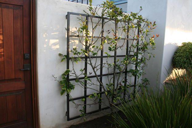 Backyard Patio, Gardening