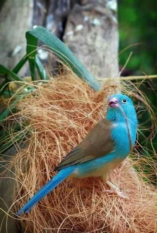 Pin By Edith Jeannette Caban On Animals Birds Pet Birds Beautiful Birds