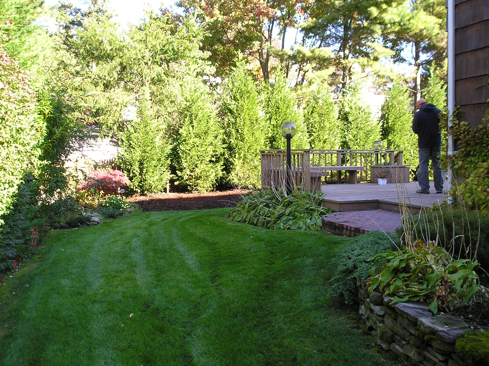 We need some backyard privacy with the new parking lot for Backyard privacy landscaping trees