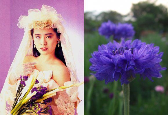 Joey Wong 名前 ジョイ・ウォン かな じょい・うぉん 英語名 Joey Wang 職業 役者 性別 女性 出身地 台湾台北市 生年月日 1967年1月31日(みずがめ座) 別表記 王祖賢 亜州第一美女