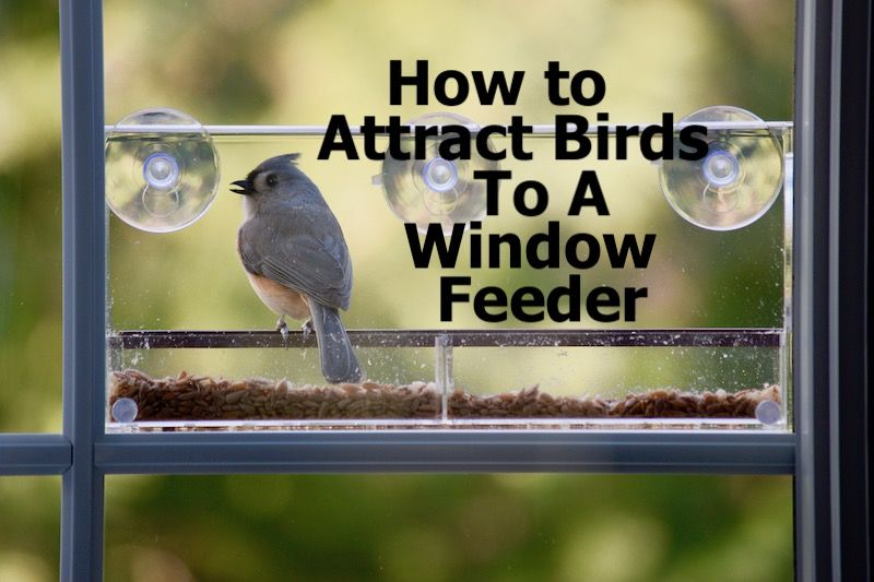 How To Attract Birds To A Window Feeder How To Attract Birds