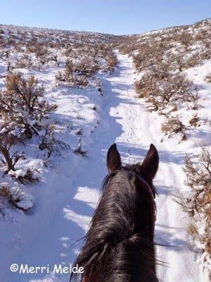The Equestrian Vagabond (USA)