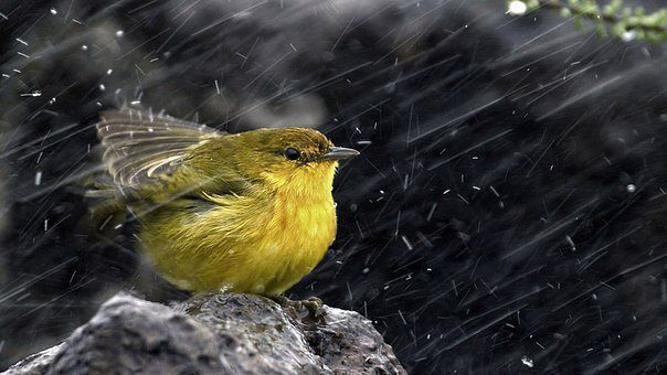 Статусы | Птицы, Дождь и Птички