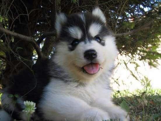 Awww adorable