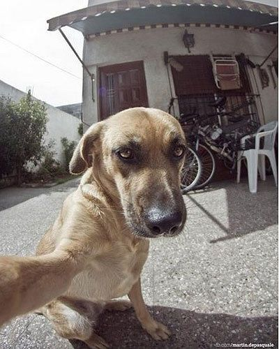 Picture Of Dog Taking Selfie