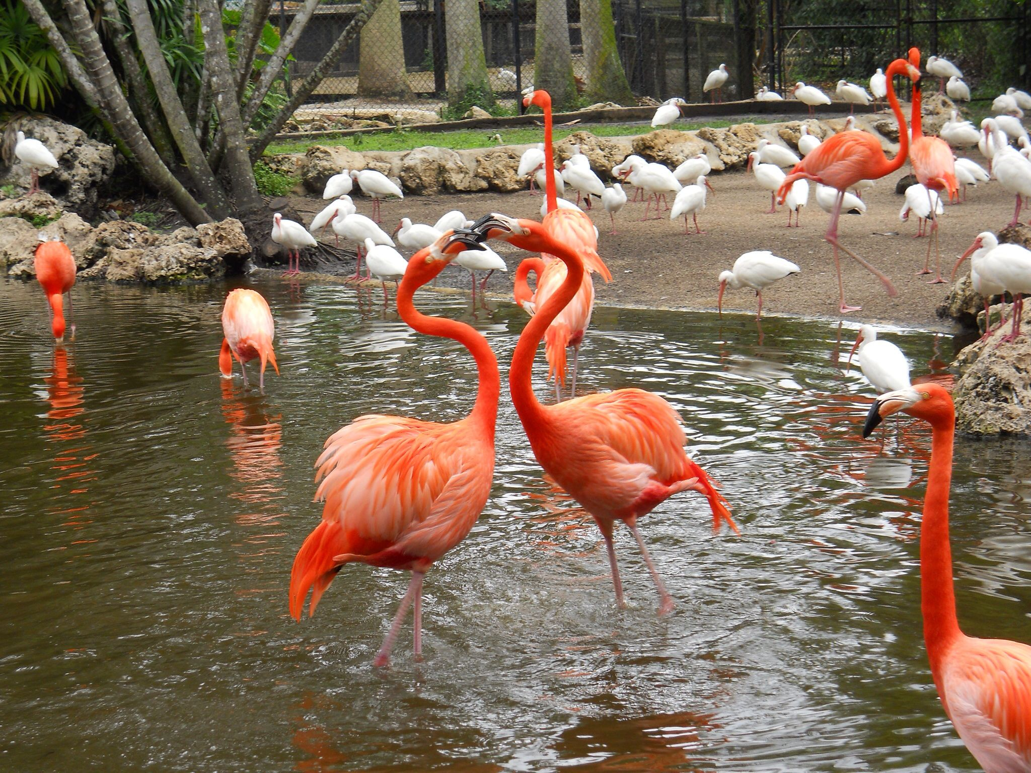 Flamingo gardens davie florida 20 minutes from downtown ft lauderdale a must see places i for Flamingo gardens fort lauderdale