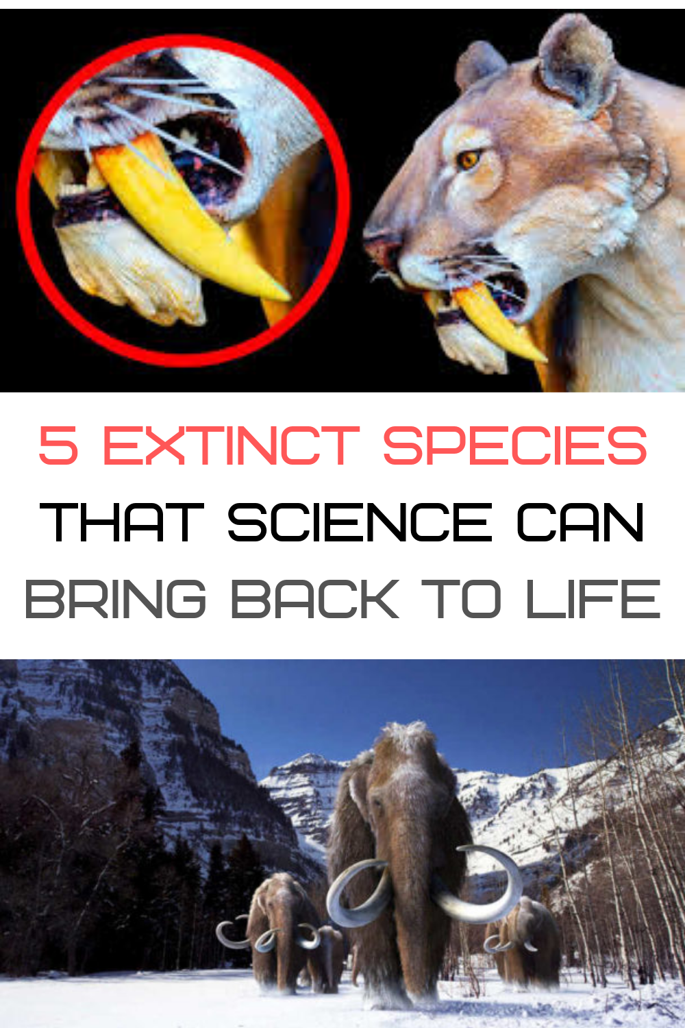 These are the 5 Extinct Species which scientists say could