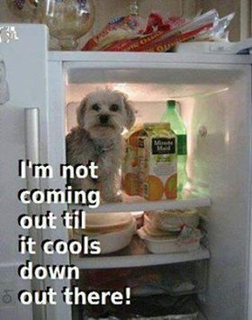 Hot Day Funny Pictures : funny, pictures, Summer, Funny, Images