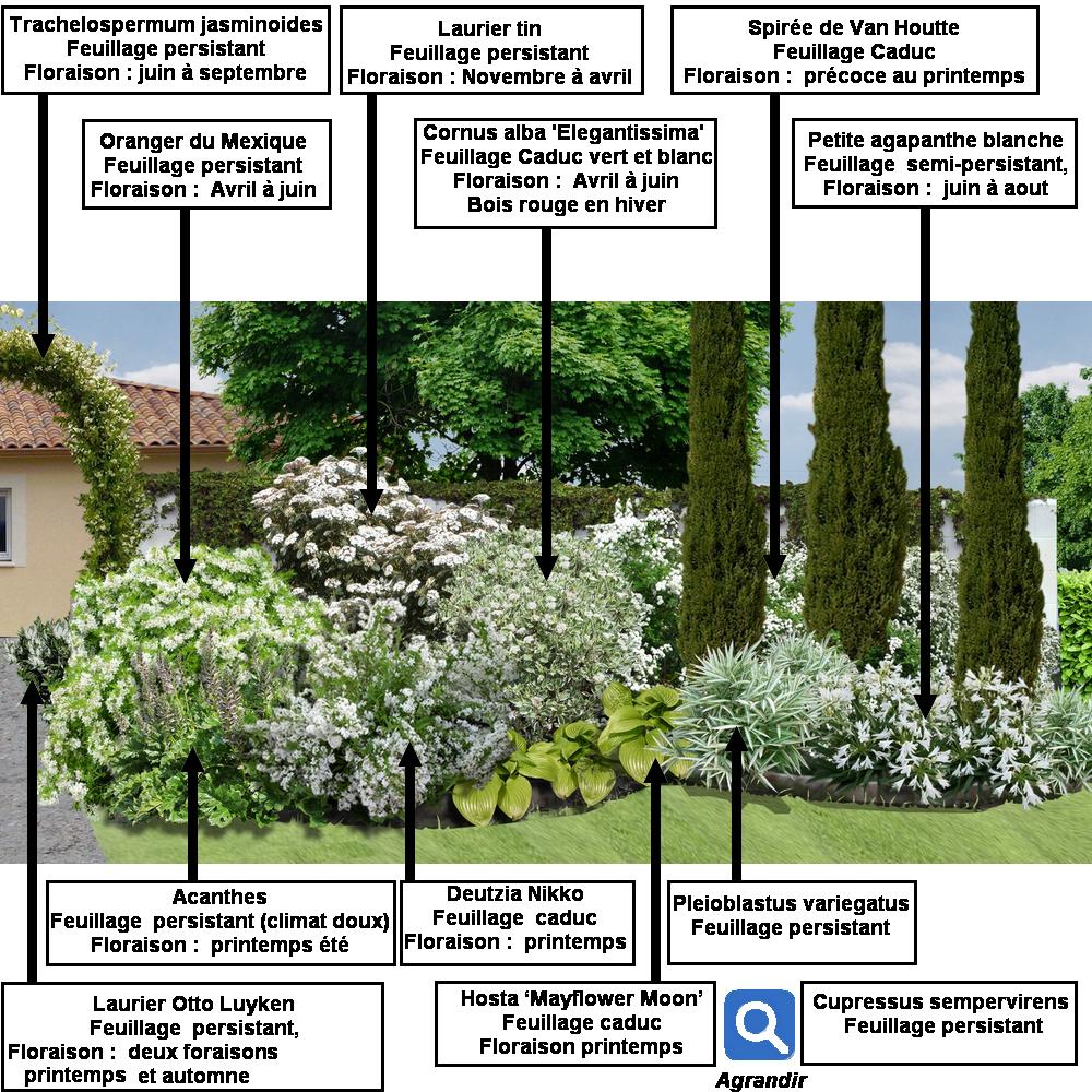 Créer un massif d\'arbustes vert et blanc : | progettare il giardino ...