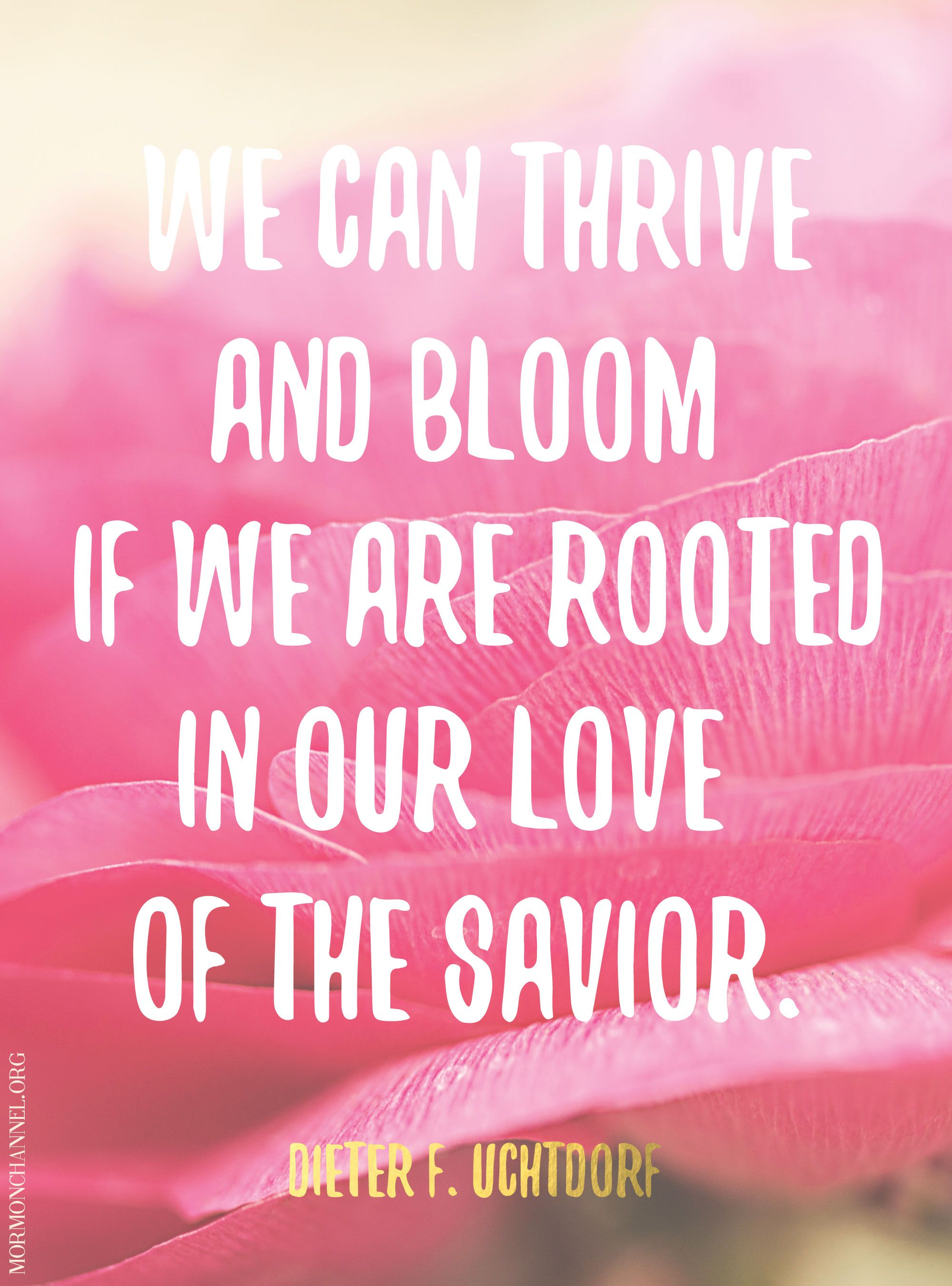 Bloom Quotes Thrive And Bloom Love Christ  Quotes  Pinterest  Churches