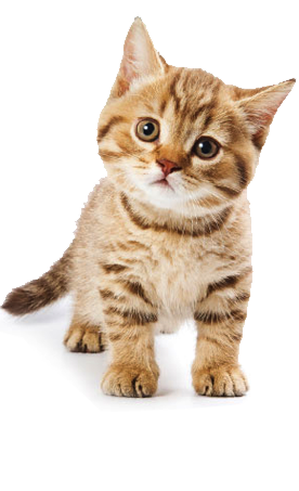 Cute Cat Pictures Photos And Images For Facebook Tumblr Cat Daycare Kittens Cutest Cute Cat