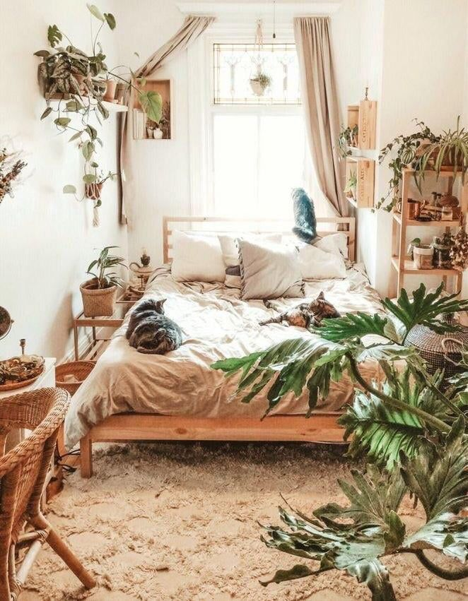 Cozy bedroom with 3 cats