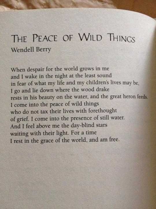 Wendell Berry:  The Peace of Wild Things