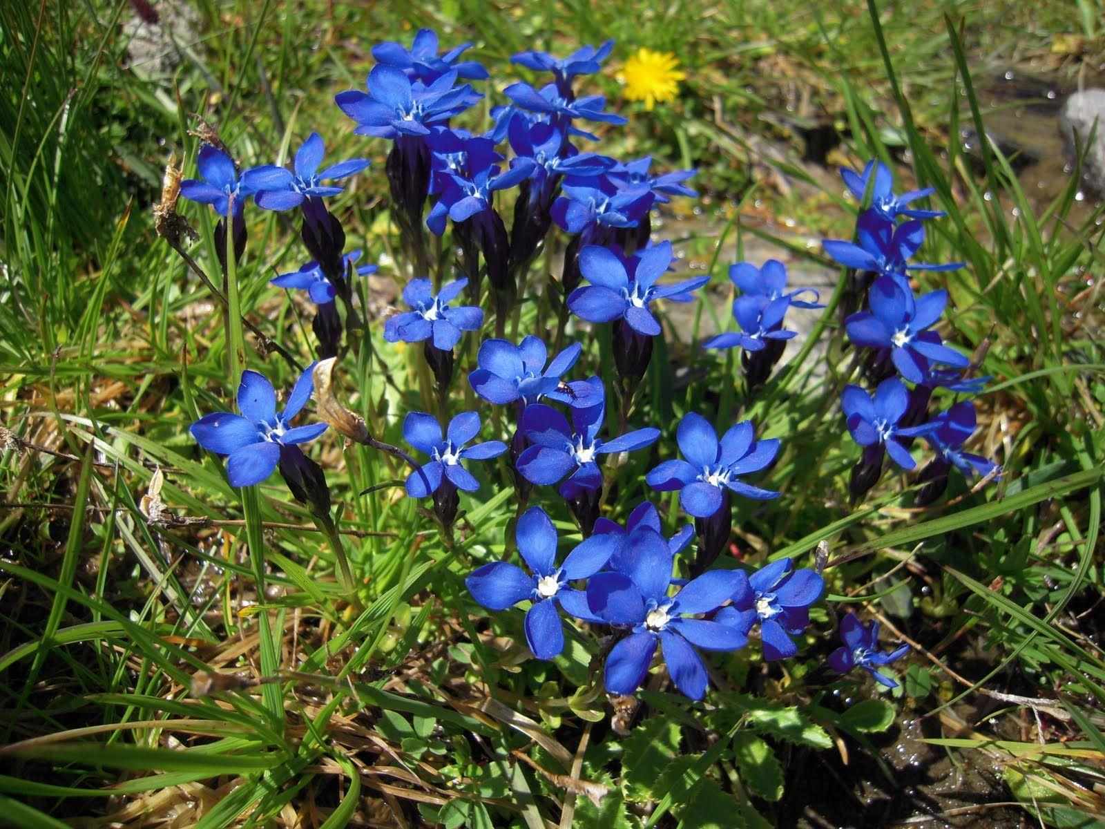 Wildflowers   LA RECHERCHE DE -