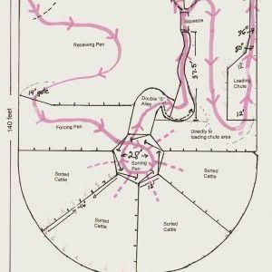 cattle flow diagram animals cattle corrals cattle. Black Bedroom Furniture Sets. Home Design Ideas