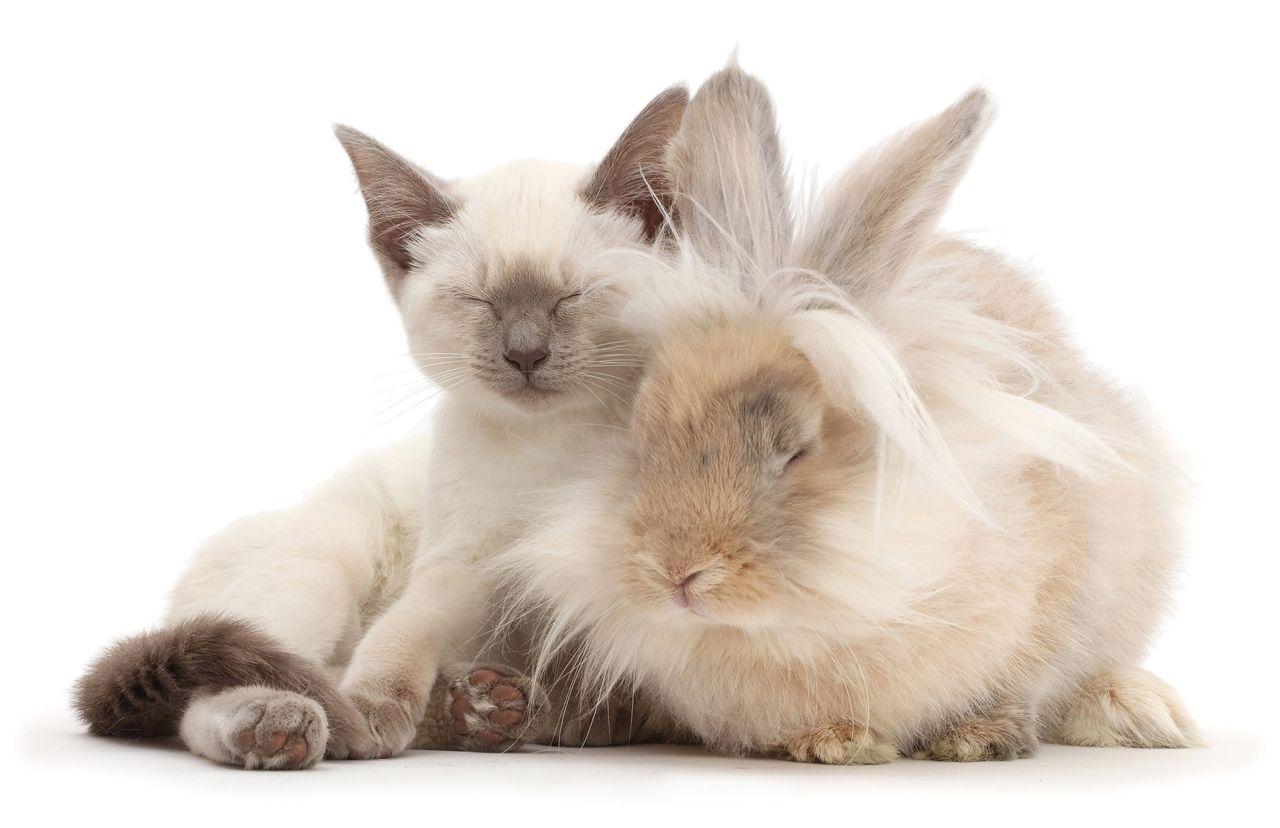 красивой фотографии кошки кроликов данной