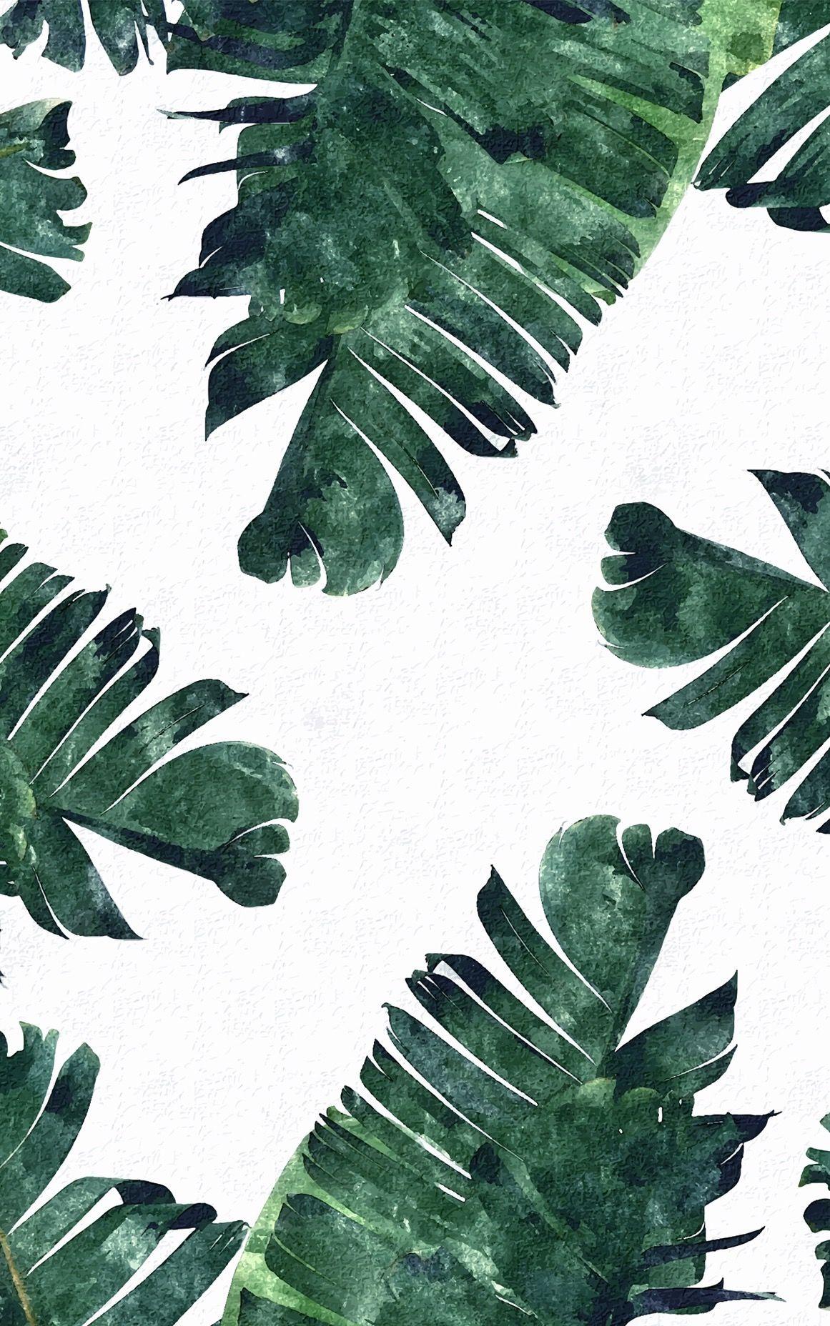 Banana Leaves Palm Leaves Tropical Background Banana