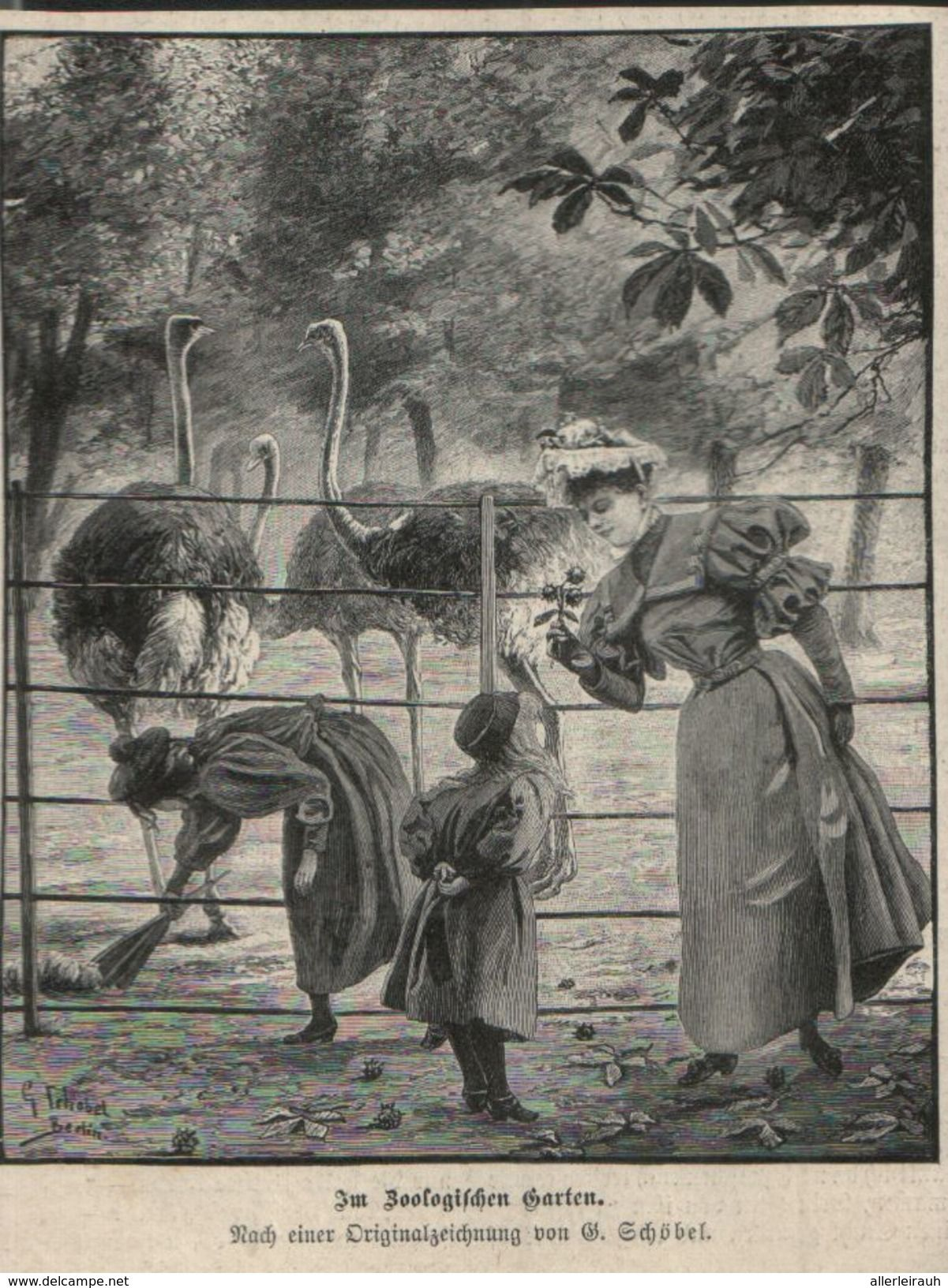 Im Zoologischen Garten B Schobel Druck Entnommen Aus Zeitschrift 1896 Zoologischer Garten Zeitschriften Comic